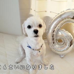 今日はユズの誕生日です