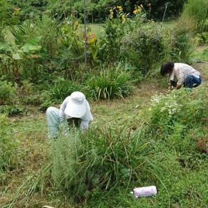 ガーデンの雑草対策