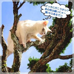 ゆづくん、木登り進歩したฅ(^•ω•^)ฅ