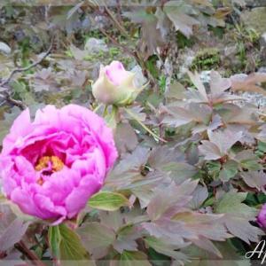 春を感じる花達が綺麗ですね~🌷