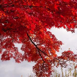 薬師公園の紅葉(もみじ)