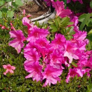 Yさんの庭の花