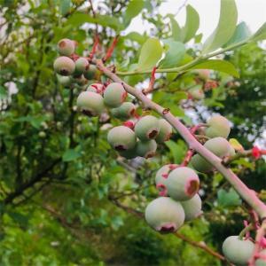 ずぼらガーデニング 丈夫な植物たち