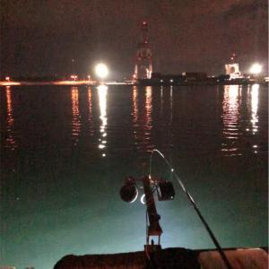 2019.2.24 石狩湾新港樽川にニシンは…?