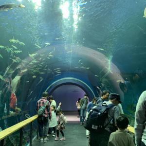 琵琶湖博物館、本気で回ったら丸一日も満喫できました 前編