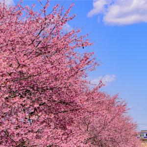 これから始まる春の物語