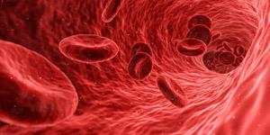 血を固まらせる働きをするビタミンK