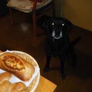 今日のパン