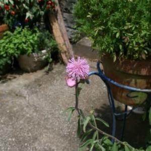 この花は何だろうか❔