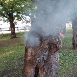 【ヤニカス】タバコをさくらの幹にある穴に投げ捨て、あわや火事に