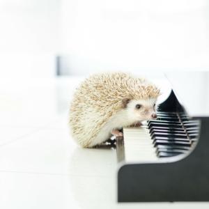 クラシックとオーケストラ。