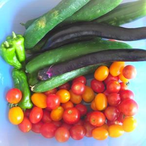 採れたてのお野菜たち。