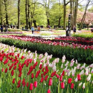 ネットでオランダ キューケンホフに旅行してみましょう