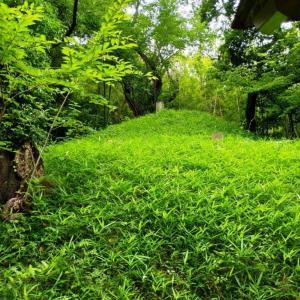 横浜まほろば近辺を散歩 その2