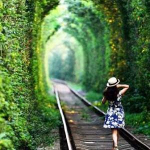 中国・南京の思い出、愛の並木トンネル