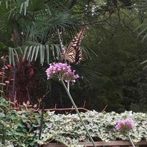 今日の 庭