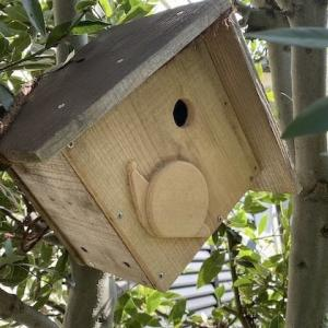 シジュウカラが巣作りを始めたようだ ♪