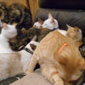 (=^・^=) 猫団子の季節、到来