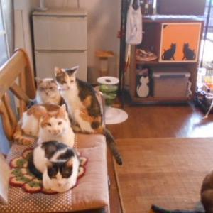 尼崎CP前の店、膝乗り、肩乗り、乳飲み子の成長、子猫の保護、老猫の魅力