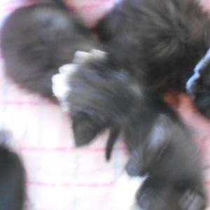 子猫、小、中、大/宝珠くん、シャーくん、何度も膝乗り/ニーナちゃん、超絶超弩級懐こい