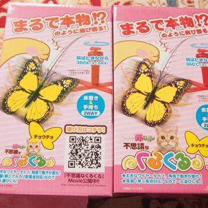 蝶に狂うトマコ