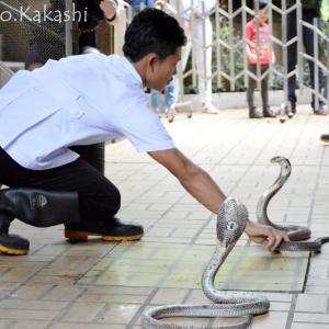 噛まれたら大変!蛇を学ぼう スネーク・ファーム @ ラマ4
