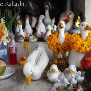 村人は今日もあひるを捧げる ホムおばあちゃん神社 @ ナコンパトム