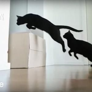 黒猫が一緒だといつもハロウィン?!黒猫の魅力について紹介する動画