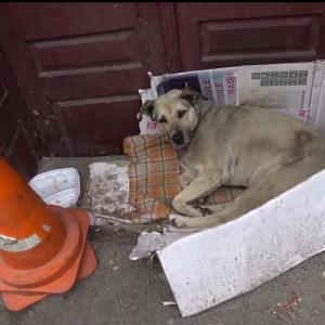 路上生活を余儀なくされたホームレス犬。旅行者の通報で無事に保護される