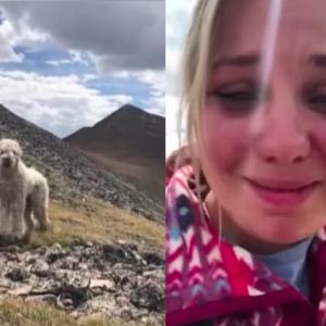 ロッキー山脈での事故で愛犬が行方不明に...。山岳地帯で感動の再会!