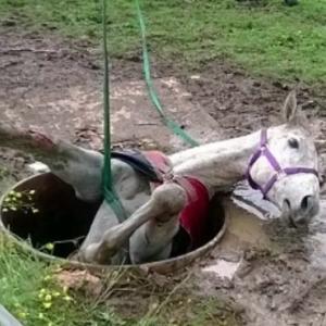 小さな穴に、大きな馬が落ちてしまった!愛する馬のため、大規模&感動の救助劇!