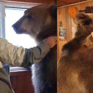 本当に大丈夫?3歳のヒグマと熱い抱擁を交わす男性にビックリ!(ロシア)