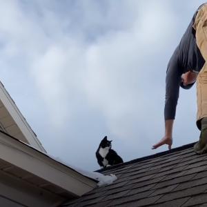 どうやって上ったの?屋根から降りてこないガンコな猫ちゃんの救出大作戦
