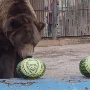 アメリカ大統領選を動物園の熊と虎がスイカを使って占った結果・・・!?