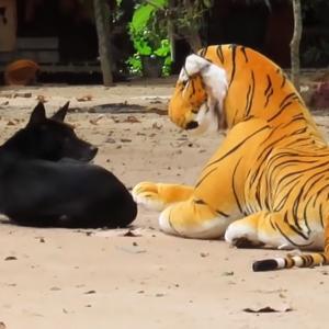偽物のトラに驚かされちゃうサルとワンコのリアクションがまるで漫画