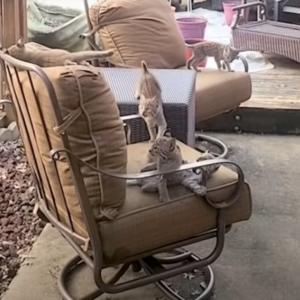 「この場所快適~♪」裏庭に住みついたボブキャットの親子に困惑する夫婦…