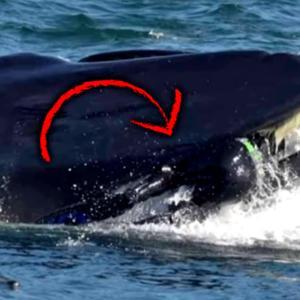 1兆分の1の可能性?!クジラに丸吞みされかけた男性、ほぼ無傷で生還する