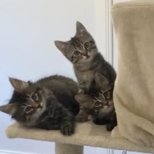 飼い主がドアをあけると・・・。子猫たち「抱かれきたのかニャ?」コクビカシゲー