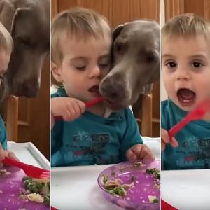 フォーク練習でポテトサラダを食べている男の子→食べようとすると横からワンコに掻っ攫われる