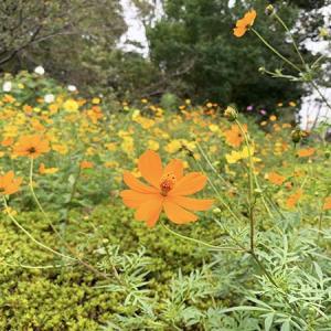 秋の花&カエル