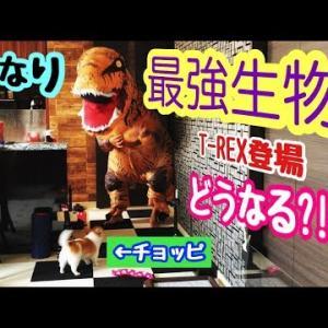 【ドッキリ】帰宅した飼い主が「恐竜最強T-REX」だったら!www #犬動画 #かわいい犬 #わんこ