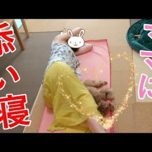 ママに添い寝する犬が可愛い♡でもその前に色々ありました…。【トイプードル】 #犬動画 #かわいい犬 #わんこ