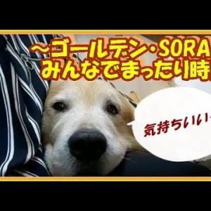 かわいい大型犬  ゴールデンレトリバー 家族だんらん。いつでもみんなと一緒にいます(笑)  Golden Retriever #犬動画 #かわいい犬 #わんこ