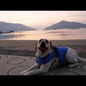 2019年バージョン 夕焼けとラブラドールレトリバー #犬動画 #かわいい犬 #わんこ