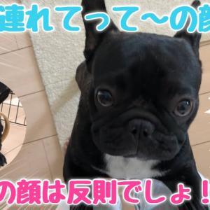 留守番したくない愛犬の動きがかわいすぎる件【かわいい行動】 #犬動画 #かわいい犬 #わんこ