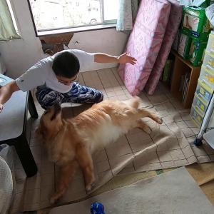 犬かわいいね #犬動画 #かわいい犬 #わんこ
