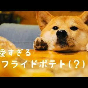 内容が全然入ってこないフライドポテトの作り方【柴犬可愛すぎて】 #犬動画 #かわいい犬 #わんこ