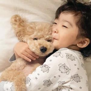 トイプードルと子どもの天使的な癒される日常をまとめた🐶🍃Toy Poodle 토이푸들 [pepepets] #犬動画 #かわいい犬 #わんこ