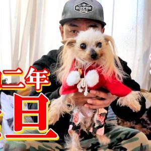 新年明けましておめでとうございます【2020年】【ヨークシャーテリア専門犬舎チャオカーネ】 #犬動画 #かわいい犬 #わんこ