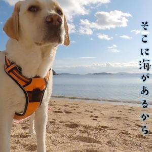 そこに海があるから….反省するラブラドールが可愛い #犬動画 #かわいい犬 #わんこ